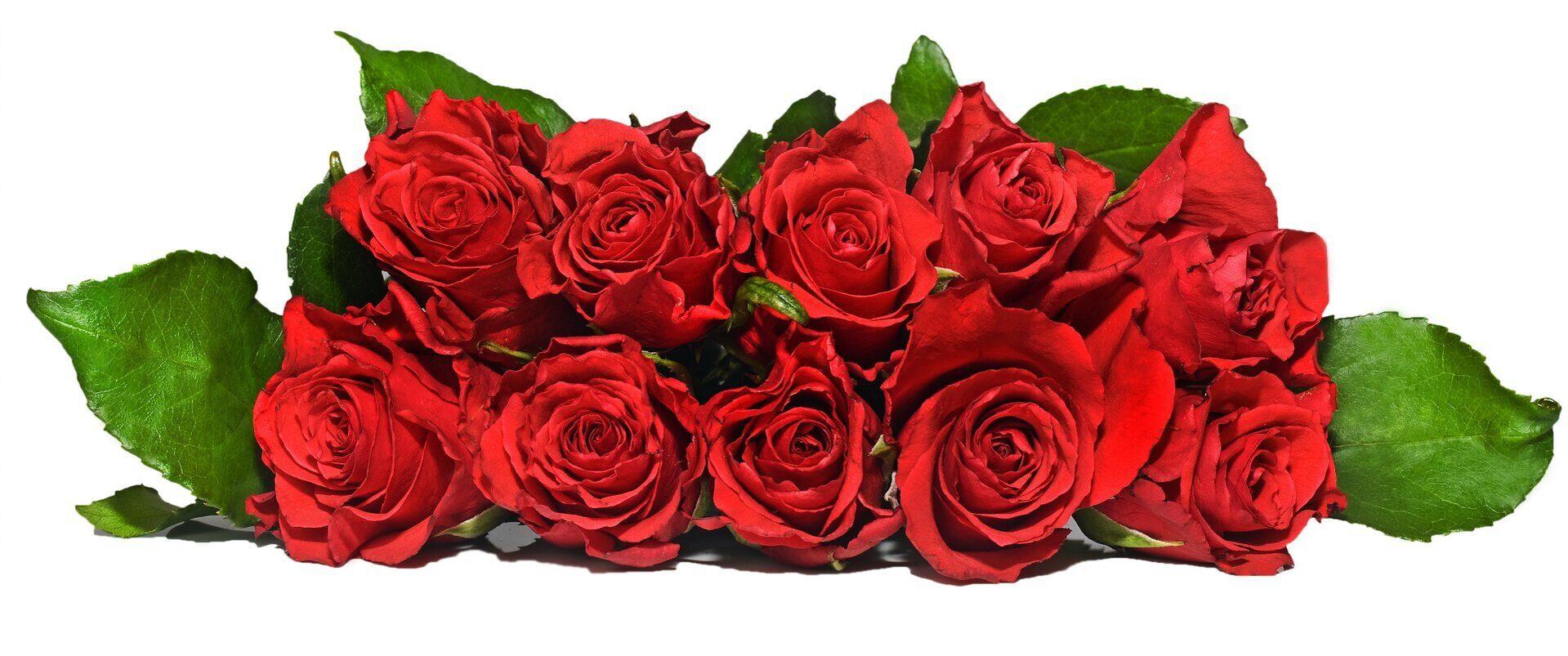 cvety-buket-krasnye-rozy